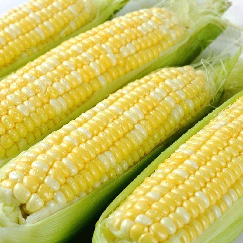 云南水果玉米5-10斤新鲜应季甜玉米棒生吃甜脆【现摘现发】包邮