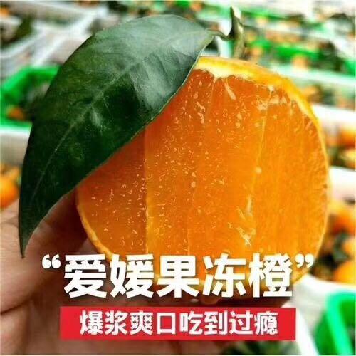 四川爱媛38号果冻橙手剥橙新鲜超甜孕妇柑橘中果5-8斤装包邮