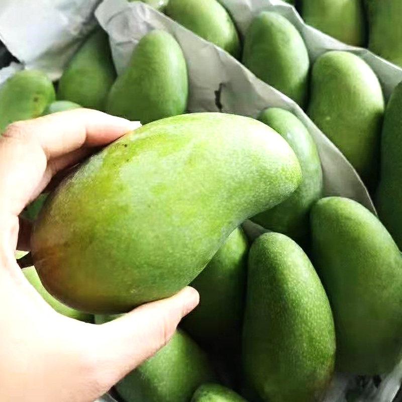 新鲜水果 芒果 金煌芒果 甜心芒5斤装 单果300g以上(12-16个装)