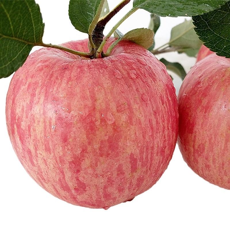 新鲜水果 苹果 红富士 洛川苹果12个装(5.5斤左右)单果80mm以上