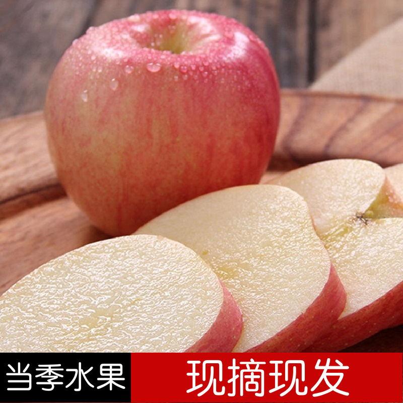 新鲜水果苹果  陕西红富士冰糖心苹果 脆甜爽口 甜度高 现摘现发  4.5斤左右 陕西红富士冰糖心苹果 产地包邮直发